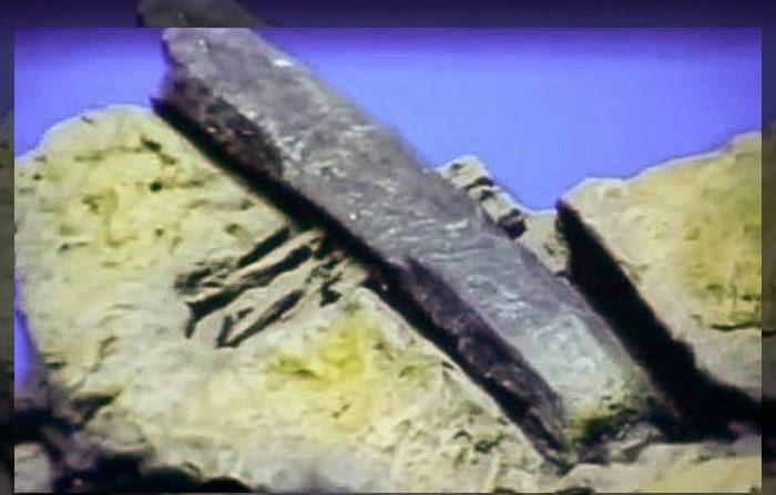 carbone risalente fossili dinosauro siti di incontri Central Coast NSW