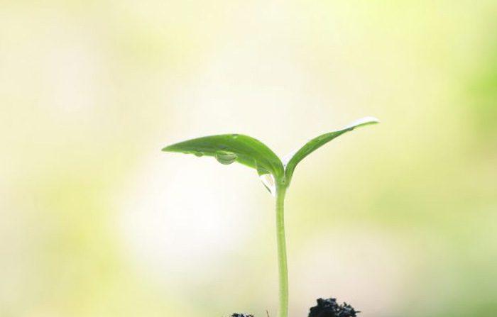 Le piante sono intelligenti e hanno una coscienza?