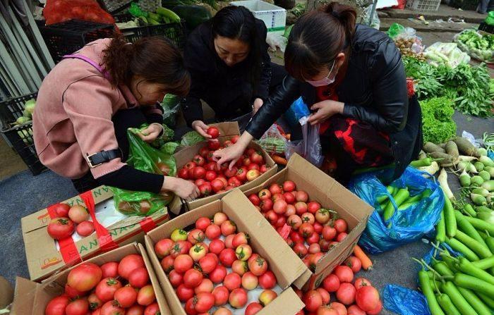 Quando il pomodoro 'Made in Italy' viene dai campi di lavoro cinesi