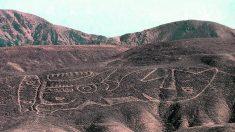 L'antico geoglifo del Perù con la balena