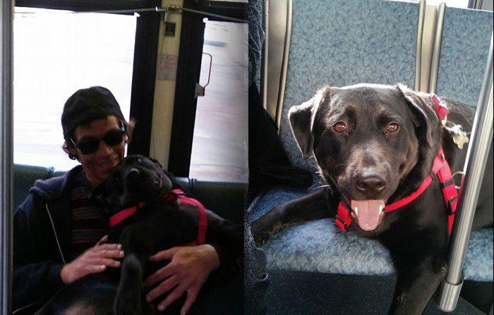 Il cane americano che va al parco da solo in autobus