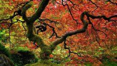 Secondo gli ultimi studi, gli alberi hanno una vita sociale, parlano, si amano e si aiutano tra loro