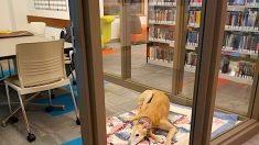 Sting, il cane che 'insegna' ai bambini a leggere ad alta voce