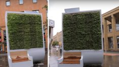Pannelli vegetali al posto degli alberi in città