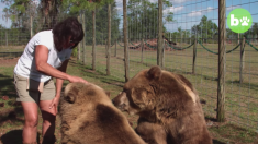 La famiglia con quattordici orsi grizzly in giardino
