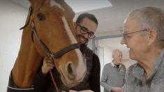 Il cavallo che fa 'miracoli' tra i pazienti