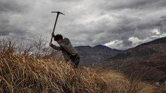 Come e perché è stata uccisa l'agricoltura cinese