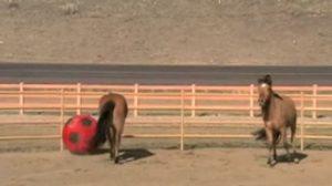 Due cavalli giocano a palla