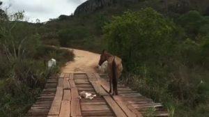 Un cavallino rimane incastrato in un ponte. E lui lo aiuta