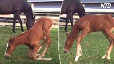 I giovani cavalli e le loro difficoltà