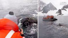 Uno stupefacente incontro con le balene