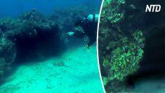Nuotano in una grotta abitata da squali