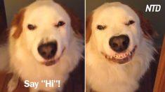 Cani che sorridono