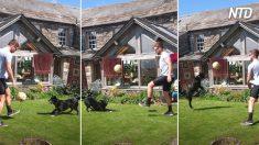 Il cane che gioca a calcio