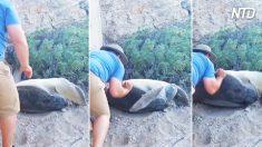 Un piccolo gesto d'altruismo verso una tartaruga ribaltata