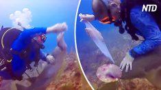 Squalo tenta di 'scippare' dei pescatori subacquei