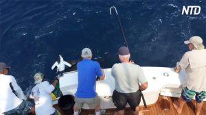Pescatori traggono in salvo degli animali nel mare