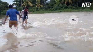 Formano una catena umana per salvare un cane in un'alluvione