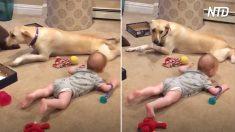 Cagnolini e bambini, un duo adorabile