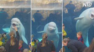 Creature marine stupende, potenti e spaventose