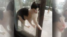 Gatti e disastri