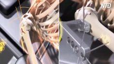 Riparazione delle ossa umane in HD