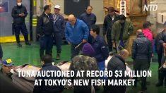 Tokyo, tonno da record venduto per quasi 3 milioni di euro