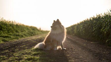 Il cucciolo abbandonato che da 10 anni attende la padrona (+Video)