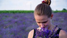 7 usi terapeutici dell'olio essenziale di lavanda