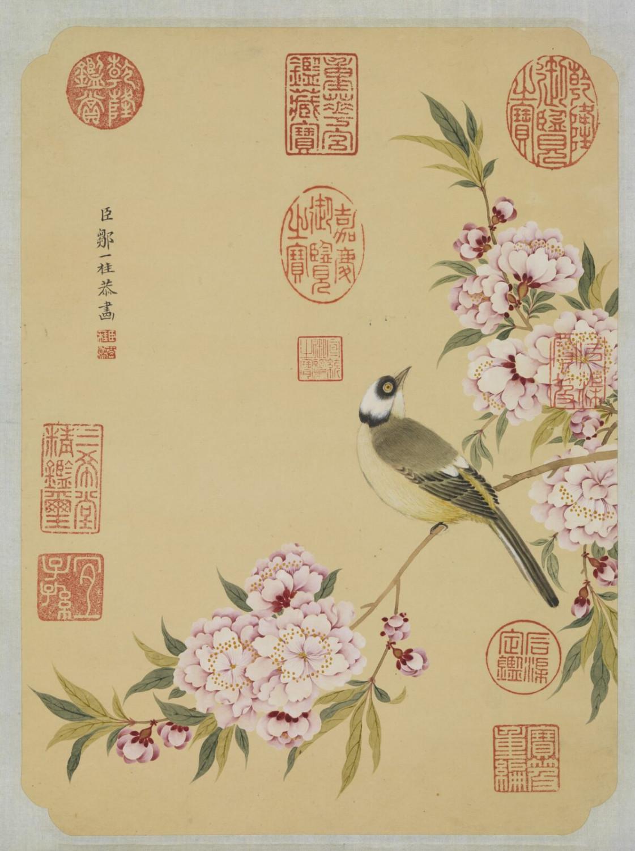 Uccello e fiori di pesco in primavera