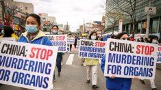 Funzionario libertà religiosa: gli Usa dovrebbero affrontare la Cina comunista sul prelievo forzato di organi