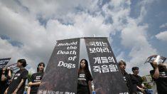 Corea del Sud, verso il divieto della carne di cane. Ma non tutti sono d'accordo