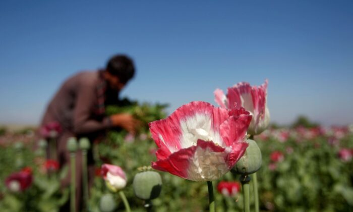Cina, capsule di papavero nel cibo dei ristoranti per creare dipendenza